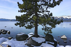Shoreline tree, Lake Tahoe (jkup) Tags: sandharbor