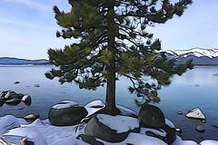 Shoreline tree, Lake Tahoe (jkup) Tags: sandharbor