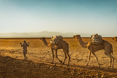 Desert Caravan (departing(YYZ)) Tags: africa travel people animals desert camel caravan ethiopia danakildepression sonnartfe35mmf28za