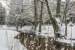 Winter river (AudioClassic) Tags: snowflake christmas morning blue winter sunlight white snow cold tree ice nature horizontal pinetree forest river outdoors photography frozen woods frost tallinn estonia day branch image wrapped nopeople christmastree snowcapped falling fairy twig snowing copyspace blizzard idyllic baretree scenics glade freshness firtree icecrystal tranquilscene coniferoustree colorimage sprucetree ruralscene beautyinnature nonurbanscene