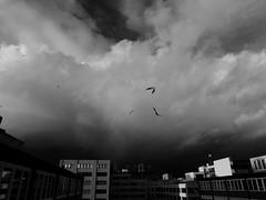 Hamburg - Hammerbrook (chicitoloco) Tags: seagulls storm clouds wind hamburg hammerbrook
