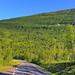 At Road from Kilpisjärvi to Skibotn
