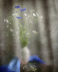 drawing summer (Button-NK) Tags: flowers summer stilllife glass cornflowers