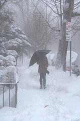 Shield from the Blizzard (A.Austin.Conti) Tags: nyc newyorkcity winter snow newyork brooklyn canon outdoors crownheights rebelxt jonas blizzard snowmageddon winterstormjonas