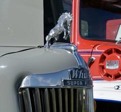Horse Power (quarterdeck888) Tags: white truck nikon flickr transport frosty lorry trucks bonnet freight tractortrailer semitrailer overtheroad haulage quarterdeck class8 roadtransport heavyhaulage d7100 truckphotos expressfreight australianroadtransport roadfreight jerilderietruckphotos jerilderietrucks australiantruckphotos