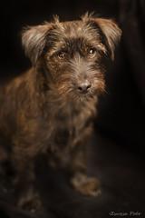 Muky (Zsuzsa Poór) Tags: dog pet animal dof interior perro mascota profundidaddecampo ef50mmf14usm coth fondonegro canonistas canoneos7d muky