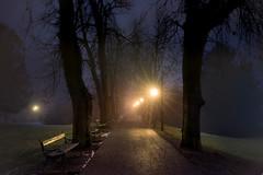A misty night in the city park (Bernd Thaller) Tags: blue trees silhouette yellow misty fog night garden lights austria evening sterreich haze alley shadows outdoor magic romantic graz bume stadtpark citypark