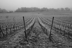 Grosses Moos (m.a.r.c.i) Tags: nature landscape schweiz switzerland vineyard suisse swiss fujifilm monochrom fujinon marci moos ins weinberg murten seeland rebberg murtensee xe1 vully anet hmmerli grossesmoos xf18mmf2