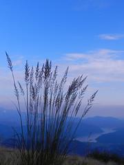Dal Monte Lema (Tomasi Mirko) Tags: varese lagomaggiore montelema naturewatcher valveddasca allnaturesparadise mirkotomasi