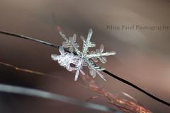 IMG_8644 (nitinpatel2) Tags: snowflakes patel nitin