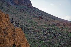 Israel! (Hemo Kerem) Tags: canon israel sheep shepherd sony exploring goat mf alpha manualfocus bedouin fd 200mm canonfd canonfd200mmf4 a7rii sonya7rm2 a7rm2 goatssheepherd