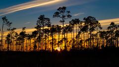IMG_0188 ENP (JRCmoreno) Tags: blue trees winter sunset sky grass florida bluesky swamp evergladesnationalpark sabana