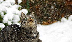 Hey.... what is that white stuff? (G_E_R_D) Tags: schnee winter snow cat feline katze
