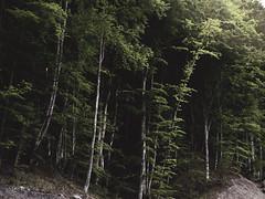 (lele_carmen) Tags: sunlight nature forest landscape adventure explore