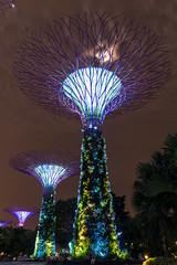 Garden By the Bay Singapore (lecointelaetitia) Tags: longexposure night garden lights nikon singapore asia wideangle arbres singapour asie nuit lumires expositionlongue grandangle sigma1020 gardenbythebay
