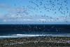Shorebirds and Penguins, Isla Magdalena, Chile (silkylemur) Tags: ocean chile cruise sea patagonia seascape southamerica pinguinos canon lens landscape tierradelfuego island penguins ship fullframe canoneos ona magallanes zoomlens endoftheworld beaglechannel chilena puntaarenas findelmundo islamagdalena landscapephotography magellanicpenguins llens 24105mm canonef canonef24105mmf4l canonef24105mmf4lisusm キャノン magdalenaisland eflens patagoniachilena selknam canonef24105mmf4lisusmlens efmount chileanpatagonia regióndemagallanesydelaantárticachilena canoneos6d fuegian regióndemagallanesydelaan