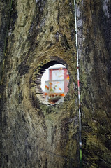 o| (chickentender (Eyewanders Foto)) Tags: light fence moss hole wide peek gr ricoh 2014 slit 21mmconversionlens vsco00kodakfilterandothertouches