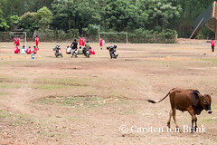 The cow leaves the football pitch (10b travelling) Tags: field animal sport asian cow football asia asien southeastasia vietnamese culture vietnam thai pitch asie tribe northern ethnic indochine indochina 2015 maichau ethnicgroup whitethai tenbrink carstentenbrink iptcbasic 10btravelling
