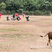 The cow leaves the football pitch