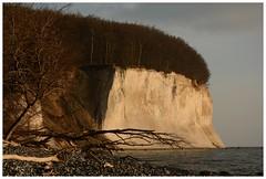 Gefallene Riesen (Caora) Tags: coast buchenwald nikon balticsea rgen ostsee frhling kreidefelsen d7100