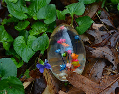Clearly (BKHagar *Kim*) Tags: flowers holiday floral easter religious symbol religion egg special clear tradition bkhagar
