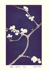 Chinese quince (Japanese Flower and Bird Art) Tags: flower art japan modern print japanese chinese woodblock quince watanabe yoichi chaenomeles rosaceae speciosa readercollection