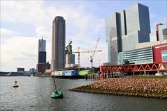 The lonely tree (Manurva) Tags: netherlands architecture rotterdam kopvanzuid rijnhaven