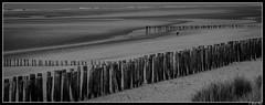 sangatte_05 (Les photos de Laurent) Tags: wood sea mer france beach mar madera sand nikon north sable wave playa arena cap cape 1855mm vague plage ola nord bois norte capote pasdecalais sangatte d3200