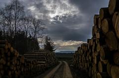 Black Isle tree harvest (prajpix) Tags: road wood trees wild sky black nature clouds scotland highlands track forestry harvest logs isle rossshire