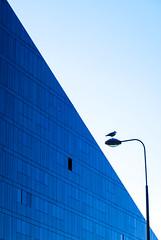 Triangull (stephenbryan825) Tags: blue seagulls liverpool lamps albertdock mannisland