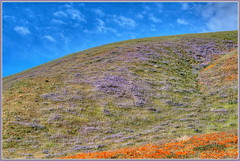 Hills Turning Purple
