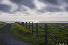 Pathway to Infinity (buffdawgus) Tags: ocean sunset northerncalifornia spring pacificocean wildflowers westcoast halfmoonbay pacificcoast springtime fenceline californa sanmateocounty canon70200mm28l leftcoast sanmateocountycoast canon5dmarkiii lightroom5 topazsw