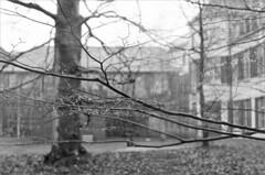 like fairy lights (frscspd) Tags: trees tree film rain museum pentax takumar bokeh courtyard xp2 treetrunk rainy raindrops ilfordxp2 fairylights denbosch 58mm mx ilford shertogenbosch filmgrain pentaxmx noordbrabantsmuseum takumar58mm hetnoordbrabantsmuseum ilfordxp2400bw 20160118 00390018