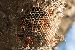 Argentinien_Insekten-94 (fotolulu2012) Tags: tierfoto