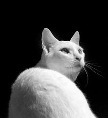 Black and white (Jenny!) Tags: badu