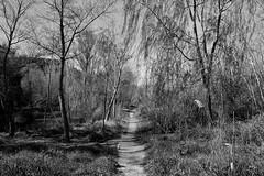 Sendero junto al rio (ZAP.M) Tags: espaa naturaleza nikon rboles flickr guadalajara vegetacin castillalamancha riohenares paisale zapm nikon5300 mpazdelcerro