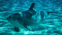 No puede evitar ser simptico (palm z) Tags: parque france francia acuario delfn plantesauvage