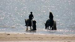 Zoutelande - Seepferdchen (stephan200659) Tags: holland beach strand sand noordzee zeeland netherland schelde pferde nordsee niederlande veere walcheren zoutelande zeeuws westerschelde nederlande strandreiten