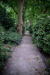 Open Garden Squares 2015 - 1834.jpg (DavidRBadger) Tags: city london greenspace planetree 2015 cityofwestminster londonplanetree urbansquare opengardensquares carltonhouseterracegarden