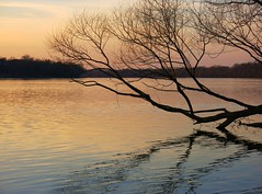 Edwards Ferry MD at sunset (karma (Karen)) Tags: trees sunset reflections maryland rivers ripples potomacriver distortions edwardsferry montgomeryco