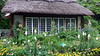 The Cottage Garden (justmecpb) Tags: summer newyork longisland foxglove marigold allium delphinium goldcoast thatchedcottage oldwestburygardens cottagegarden oldwestbury midsummernight floweringonion