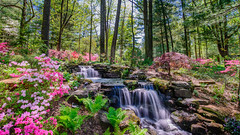 Azalea Path (bir_cfc) Tags: park flowers summer lake water sunshine creek river botanical waterfall nikon stream long exposure path sunny explore bloom april azalea pong d610