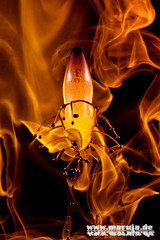eternal flame (michaelfritze) Tags: wasser bubbles drop splash liquids highspeed wassertropfen tropfen tats highspeedphotography fontne liquidart strobist farbtropfen hochgeschwindigkeitsfotografie liquiddrop stopshot michaelfritze
