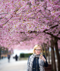 Kungstrdgrden, April 25, 2016 (Ulf Bodin) Tags: portrait woman se spring sweden stockholm cherryblossom sakura sverige vr selfie kungstrdgrden portrtt stockholmsln canoneos5dmarkiii krbrsblom canonef100400mmf4556lisiiusm