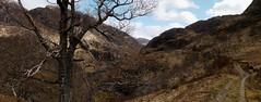 On the track towards Druim Fada (Mumbles Head) Tags: mountains scotland highlands grahams glenelg