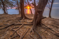 Cedar frame for the setting sun (MichaelSOwens) Tags: park sunset red state florida fort roots southern cedar hdr fernandina clinch