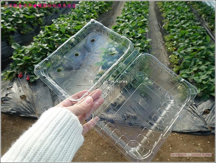 草莓園採草莓 (7).JPG
