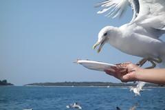 DSC03578 (winglet777) Tags: sea vacation croatia arena kanal pula hrvatska istra kroatien limski brijuni kamenjak istrien gopro hero3 sonyrx100
