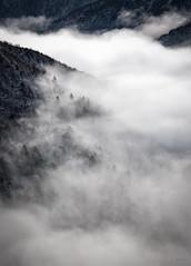 Un_soffice_manto (Danilo Mazzanti) Tags: alberi photography foto photos valle fotografia nebbia inverno freddo fotografo danilo ghiaccio mazzanti galaverna danilomazzanti wwwdanilomazzantiit