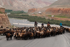 Heavy traffic (Michal Pawelczyk) Tags: road trip holiday bike bicycle june nikon asia flickr aim centralasia pamir wakacje 2015 czerwiec azja d80 pamirhighway azjasrodkowa azjacentralna